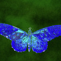 Blue Butterfly On Green by Isabella Howard