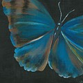 Blue Butterfly by Sheli Paez