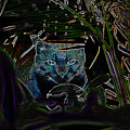 Blue Cat In The Garden by David Lee Thompson