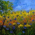 Blue Cornflowers 7761 by Pol Ledent