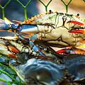 Blue Crab Cha Cha Cha by Karen Wiles