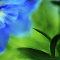 Blue Delphinium by Bonnie Bruno