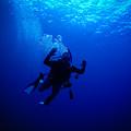 Blue Diver by Michael Scott