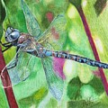 Blue Dragonfly by Christian Conner
