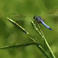 Blue Dragonfly - Painting by Ericamaxine Price