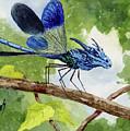 Blue Dragonfly by Sam Sidders
