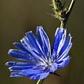 Blue Dream.. by Nina Stavlund