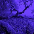 Blue Dreaming Moon by JoAnn SkyWatcher