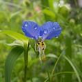 Blue Drops by Michael Parsons