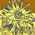 Blue-edged Dahlia by Will Borden