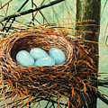 Blue Eggs In Nest by Frank Wilson