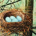 Blue Eggs In Nest by Frank Wilson