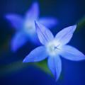 Blue Etoile by Mike Reid