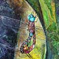 Blue-eyed Darner Mating Wheel by Rick Mosher