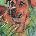 Blue Eyed Dog by Maria Reichert