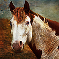 Blue-eyed Horse by Anna Louise