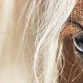 Blue Eyed Horse by Kathryn Bell