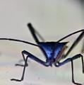 Blue-eyed Monster by Douglas Barnett