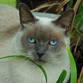 Blue Eyes In The Garden by Kathi Shotwell