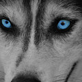 Blue Eyes by James Young