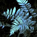 Blue Fern by Susanne Van Hulst