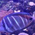 Blue Fish by Utpal Datta