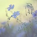 Blue Flex Flower. Nostalgic by Jenny Rainbow