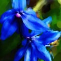 Blue Flower 10-30-09 by David Lane