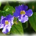 Blue Flower by Jan Daniels