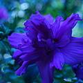 Blue Flower by Jeffery L Bowers