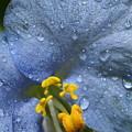 Blue Spring Flower by Jordan Marsh