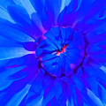 Blue Flower by Nick Photography
