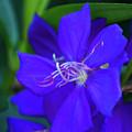 Blue Flower by Pamela Williams