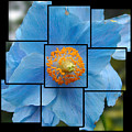 Blue Flower Photo Sculpture  Butchart Gardens  Victoria Bc Canada by Michael Bessler