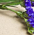 Blue Flower by Svetlana Sewell
