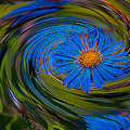 Blue Flower Whirlpool by Chester Wiker