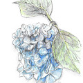 Blue Flower by Yana Sadykova