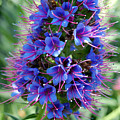 Blue Flowers by Amy Fose