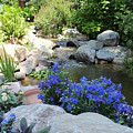 Blue Flowers And Stream by Corey Ford