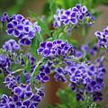 Blue Flowers Card by Carol Groenen