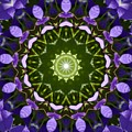 Blue Flowers Kaleidoscope by Cynthia Woods