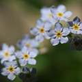 Blue Flowers by Paul Tokarchuk