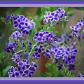 Blue Flowers With Colorful Border by Carol Groenen