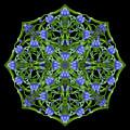 Blue Gentian Lattice by Karen Jordan Allen