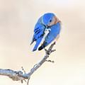 Blue Grace by Betty LaRue
