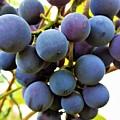 Blue Grapes by Cristina Stefan
