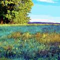 Blue Grass Sunny Day by Shirley Moravec