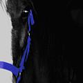 Blue Halter by Hannah Breidenbach