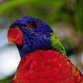 Blue Head Bird by David Lee Thompson