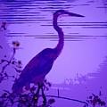 Blue Heron... by Arthur Miller